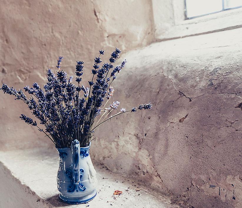 Lavendel Duft Nase
